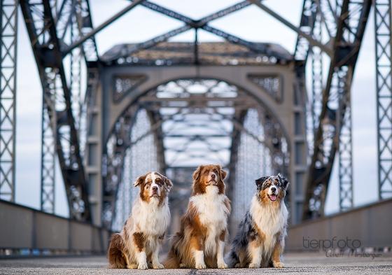 Brückenwächter