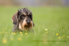 Dackel im Frühling :-)
