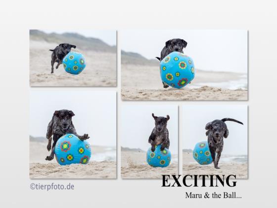 Der Ball war der Renner am Strand!